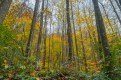 The forest's Autumn splendor