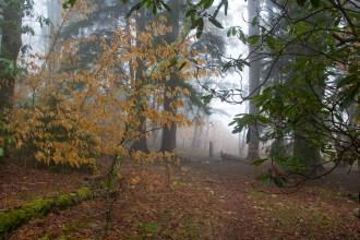 Beech trees surround campsite