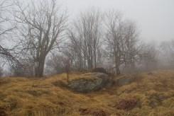 Fork Ridge
