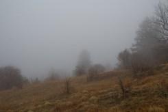 Grassy bald Fork Ridge