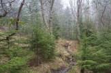 Mountain bog area