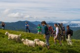 Herding the baby goats