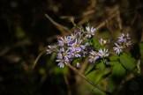 Last wildflowers of the season
