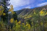 Vail Valley aspens