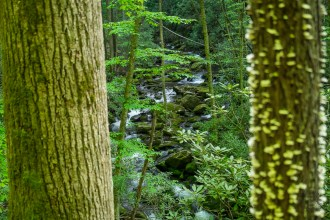 Kephart Prong between trees