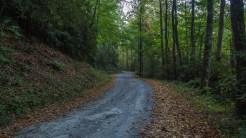 Road at the trailhead