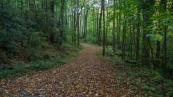 Little Cataloochee Trail