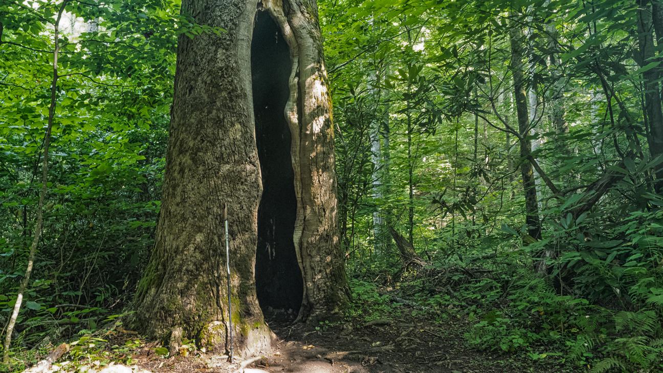 Meanderthals | Boogerman Loop Trail, Great Smoky Mountains ...