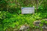 Craggy Gardens trailhead
