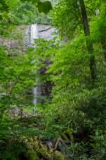 Douglas Falls through trees