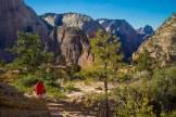 Contemplating Zion Canyon