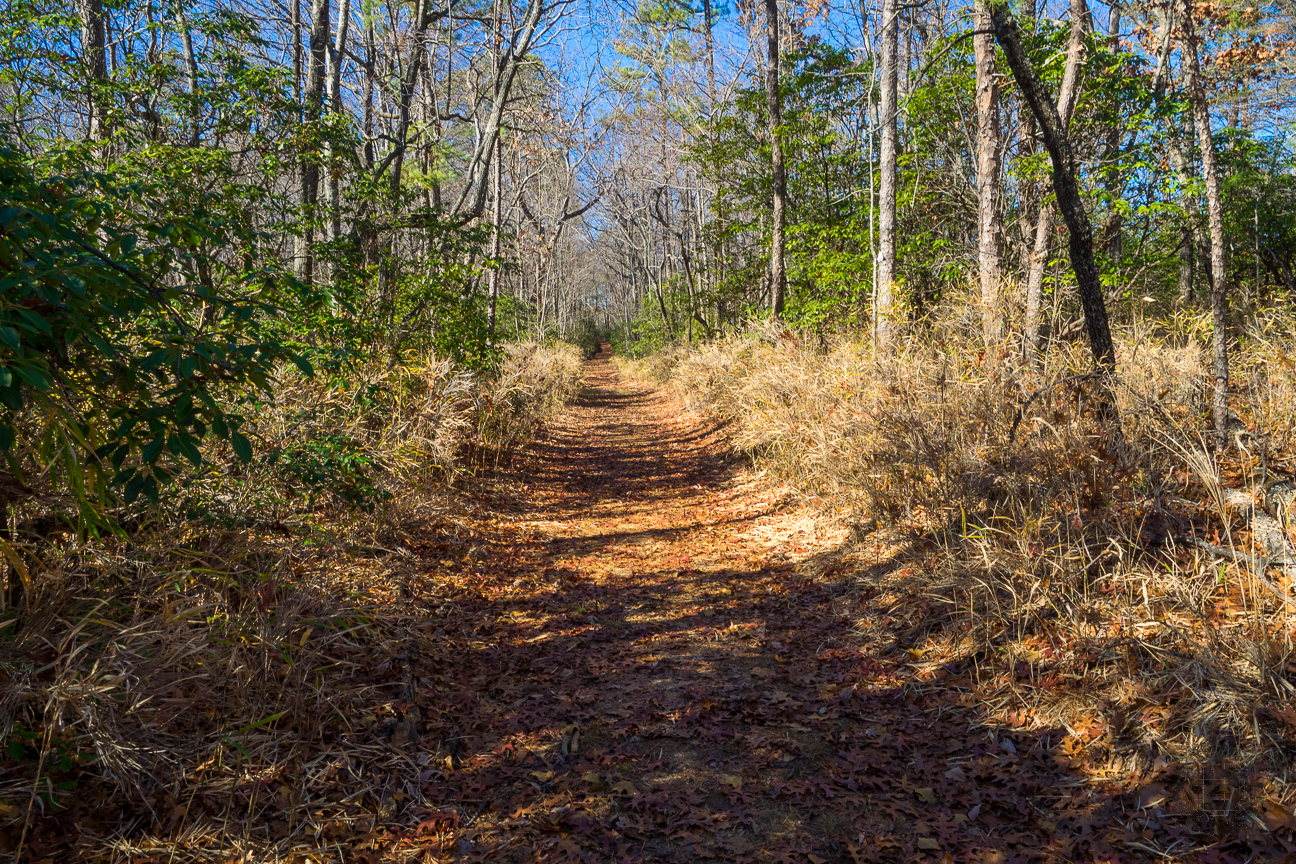 The trail along the Oconee Passage is extremely well maintained, as this stretch along the old Station Mountain Road testifies. Notice the switch cane that lines both sides of the pathway.