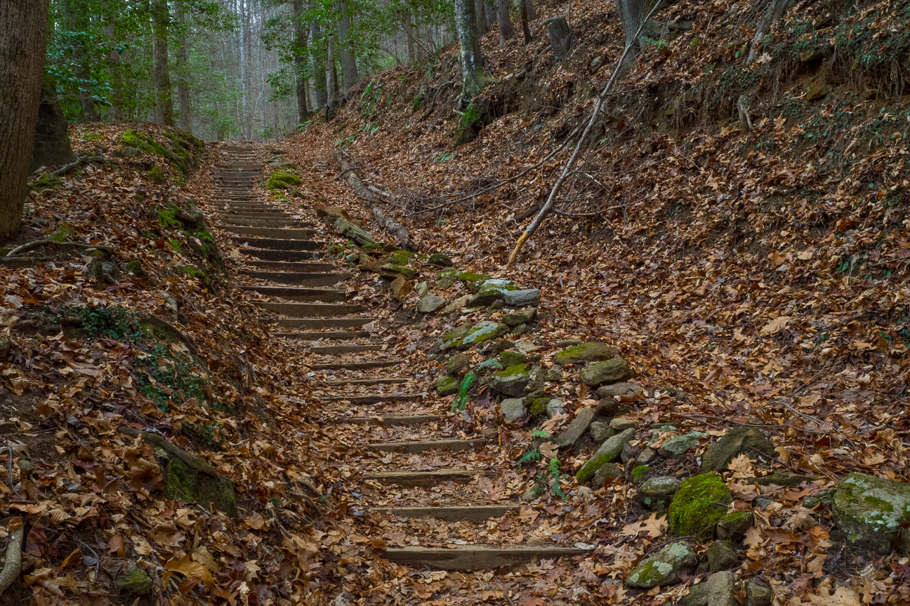 I was descending these stairs, but I couldn't resist the look back up, to the forest above and the serenity of the moment.