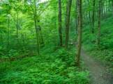 Verdant trail