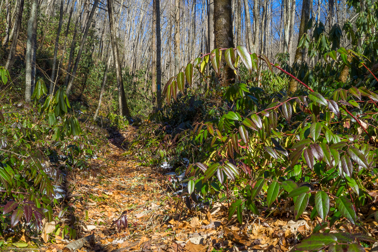 While we hiked the length of the Tennessee Gulf Trail, the air temperature warmed nearly 25 degrees. So on the way back, the snow was becoming slushy, and was even completely melted in some spots like this one. The dog hobble that lined the trail was literally glistening.