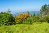 Azaleas and Smoky Mountains