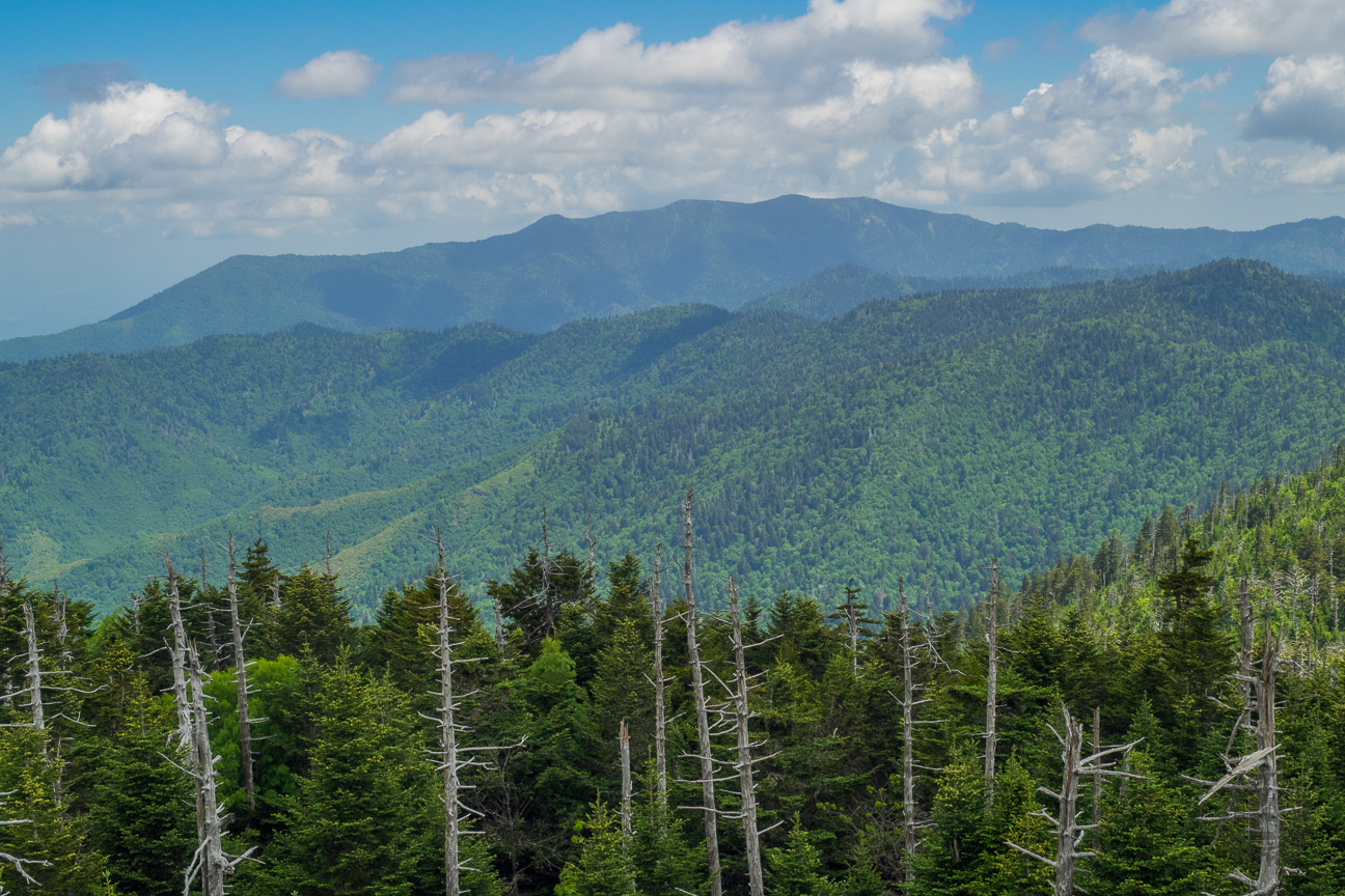 Meanderthals   Clingmans Dome Area Trails, Great Smoky ...