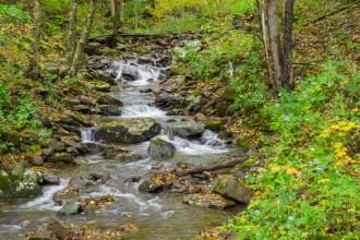 Reuben Creek
