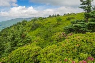 Rhodos on Grassy Ridge