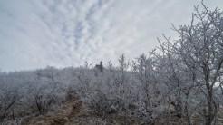 Climbing Jane Bald