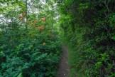 Azalea on the trail
