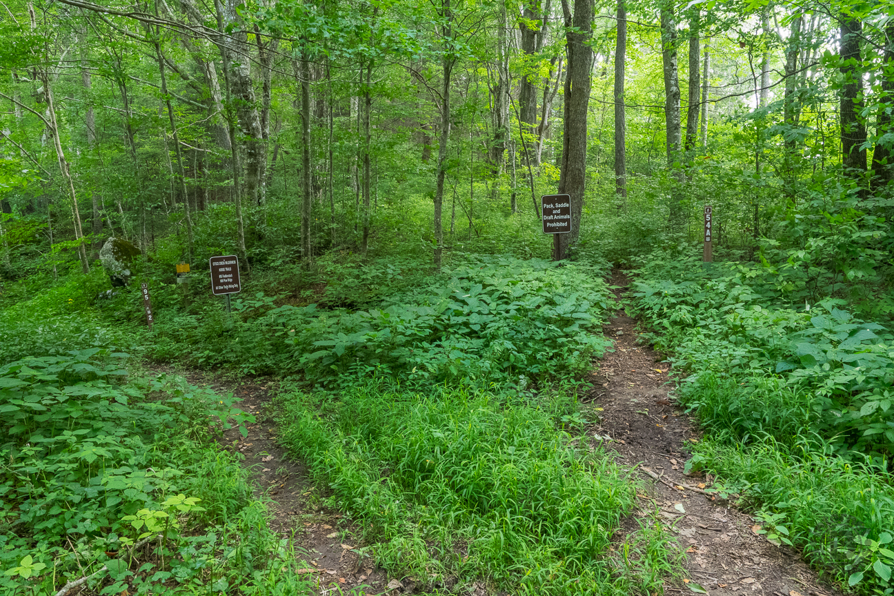 This is the trail junction at the end of Forest Road 217H. The trail for this hike is the one on the right, labelled 54A, and named the Bob Bald Connector Trail.