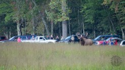 Is Cataloochee getting overcrowded?