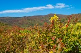 Black Balsam Ridge