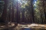 Black Balsam forest
