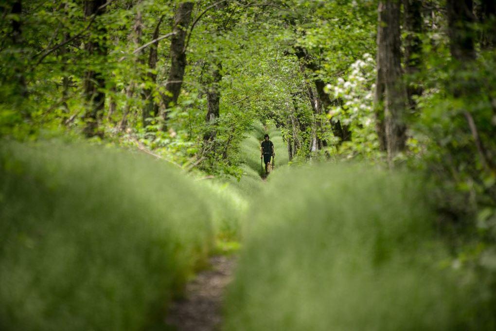 The long green tunnel through Shenandoah National Park.