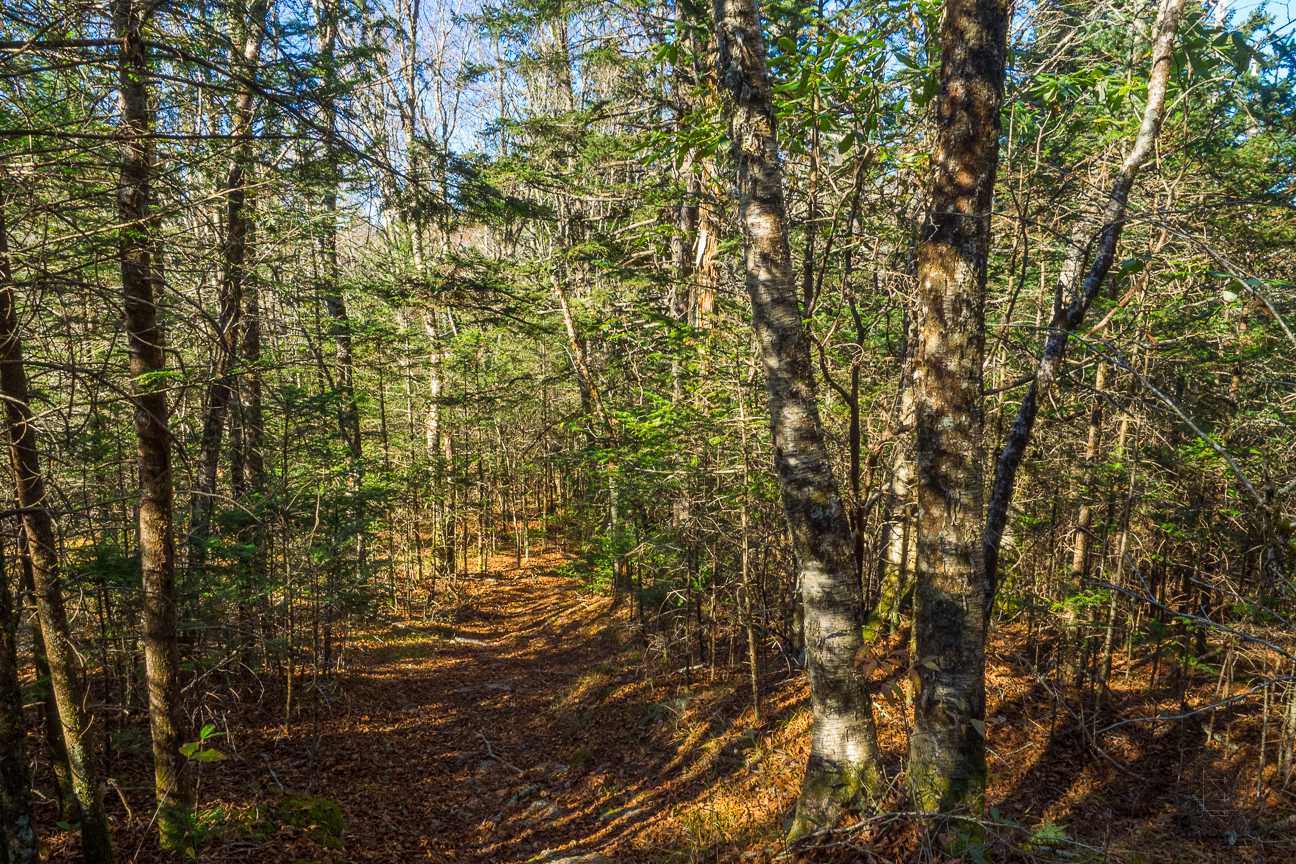 The trail is lovely here, surrounded by beautiful woods. The loggers apparently also thought so, as this area is mostly new growth forest. Watch for the logging artifacts still found alongside the trail.