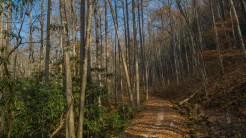Chasteen Creek Trail