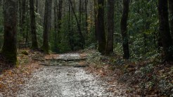 Fallen branch on the trail