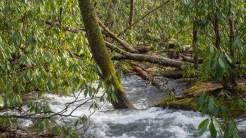 Wild water on Chasteen Creek