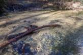 Crystal clear Cannon Creek