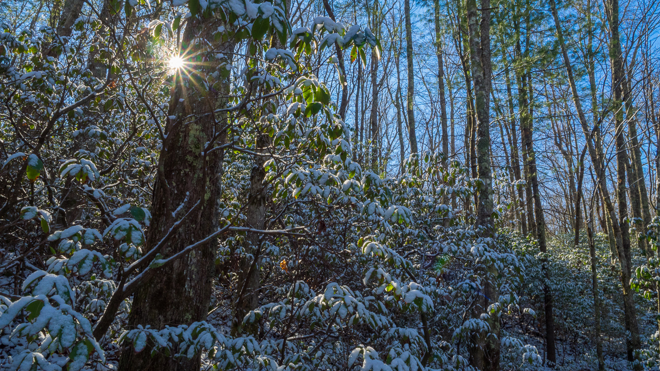 This one photo is a good summary of what the forest was like on this beautiful January day. Snow covered mountain laurel leaves with the morning sun peeking through the tree branches and an azure sky as the backdrop.
