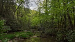 Cove Creek upstream