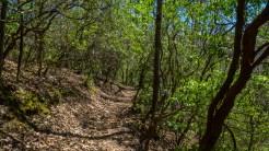 Mountain laurel canopy