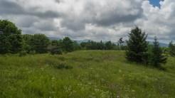 East from Earl's meadow