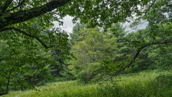 Evergreen cove