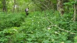 The monarda trail
