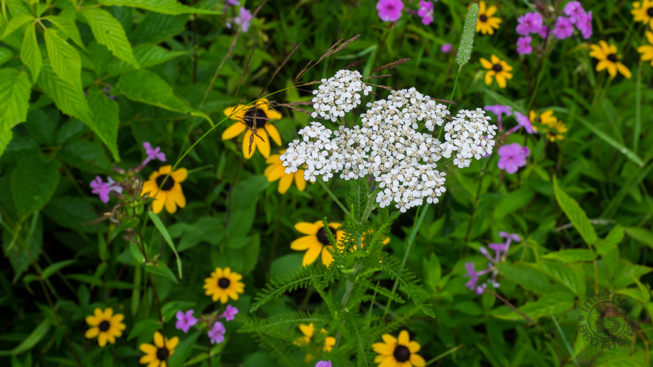 The trail was lined with a treasure trove of wildflowers.