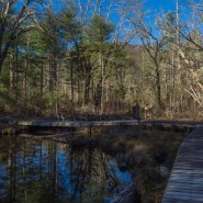 Cradle of Forestry Offers Walks to Beaver Wetland