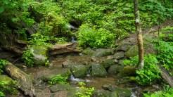A branch of Baxter Creek