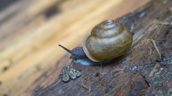 Snails were all over