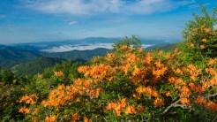 Azalea and Black Mountains
