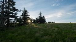 Sun rising through the spruce