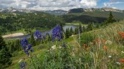 Flowers at Ivanhoe Lake