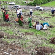 66 million trees planted in 12 hours in India