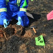 How do firefighters determine the cause of a wildfire?